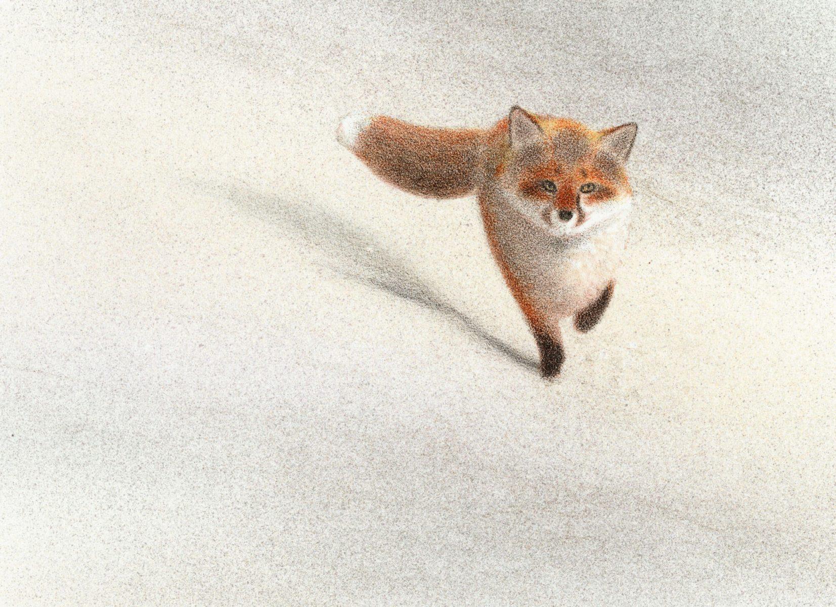 documentation sur le renard roux